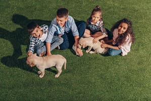 Kids playing with puppy on artificial grass