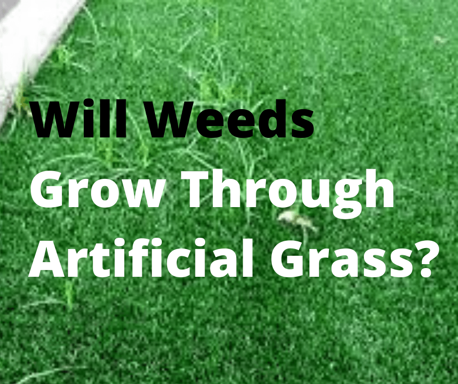 Will Weeds Grow Through Artificial Grass_